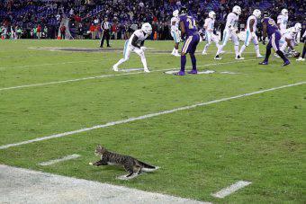 nfl Baltimore Ravens Miami Dolphins